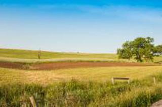 Yellow-green field, across which runs a dirt road